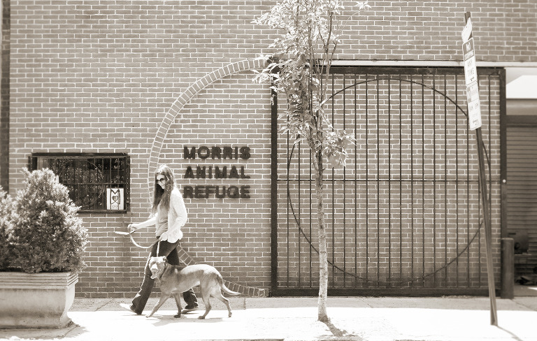 Philadelphia Pet Photography