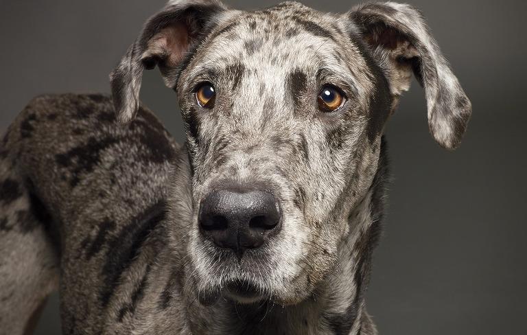 Steward Dog Portrait - Pet Photography
