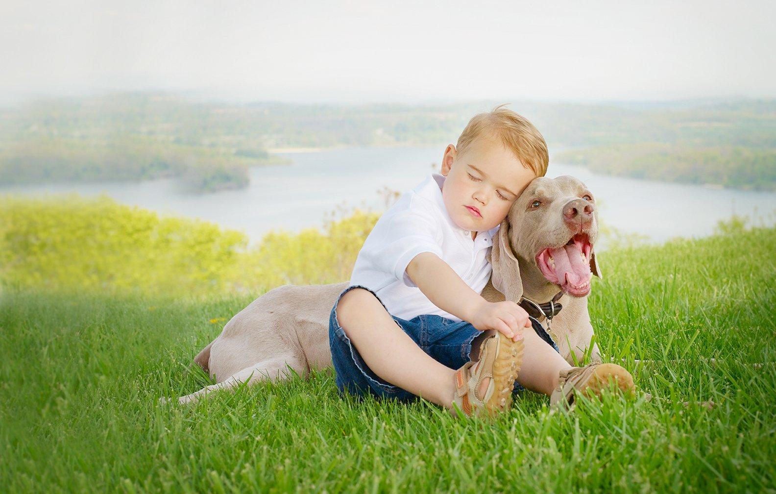 award winning outdoor pet photography reading pa award winning
