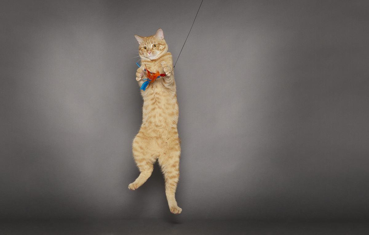 Schroeder Cat Portrait