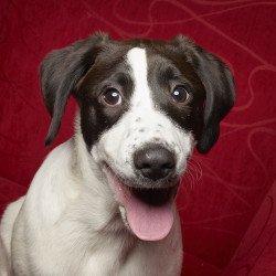Big Fluffy Dog rescue, photography, philadelphia, puppy
