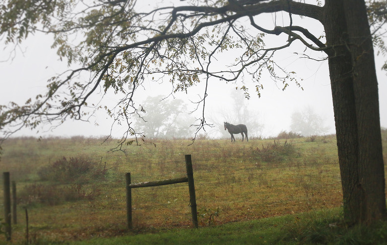 horse in a misty field