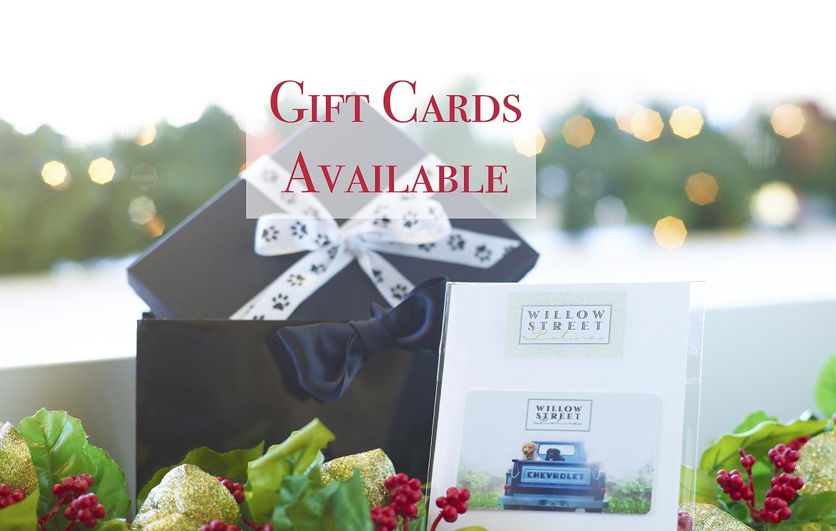Gift Cards Pet Photography - Lancaster, PA