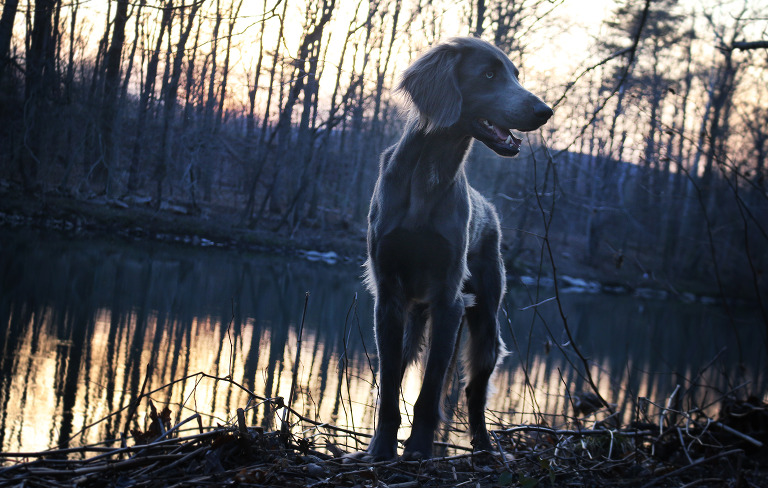 Modricker outdoor dog portrait