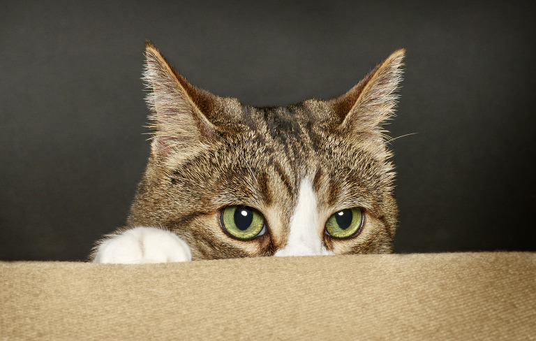 cat poking face up from behind cushion