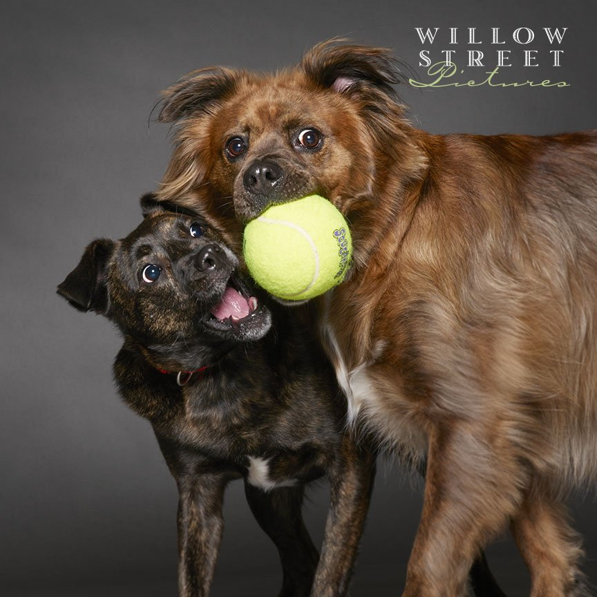 dogs, doggo, playing, pet portraits