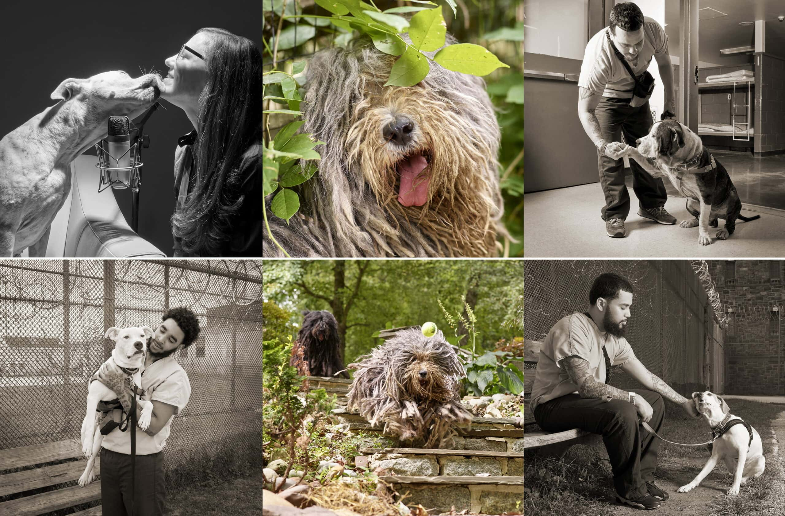 2nd Annual Pet Portrait Gallery Opening Set For November 9th