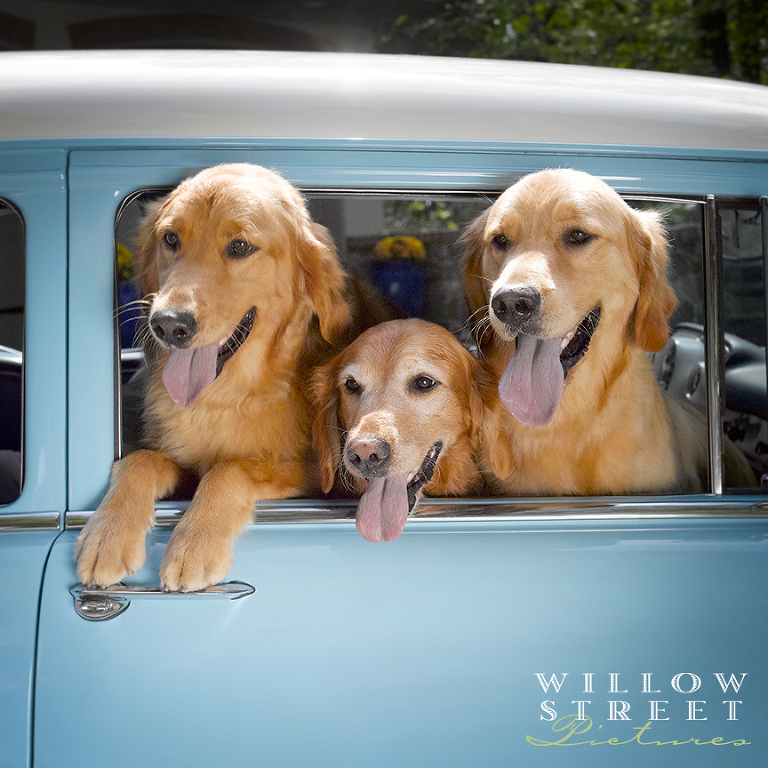 willow-street-pictures-pet-photography