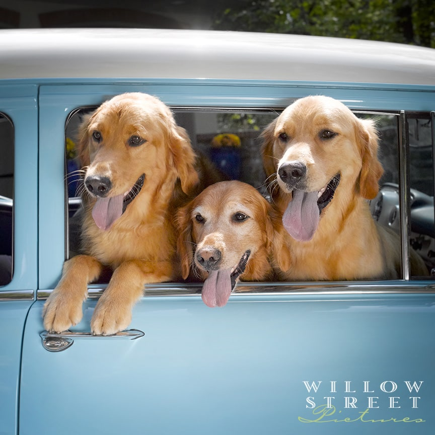 Willow Street Pictures Pet Photography