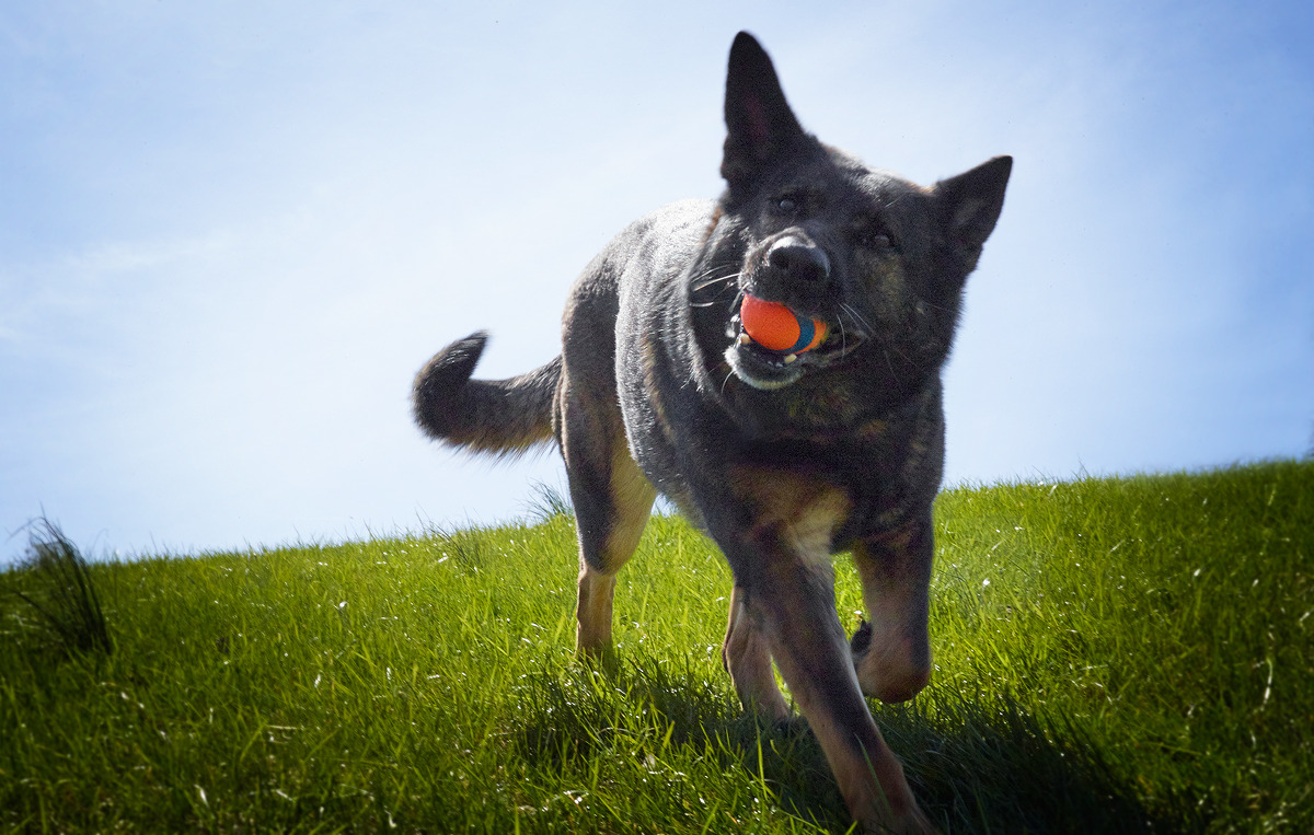 dog with running with ball - Willow Street Pictures